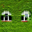 Windows and Green Ivy — Stock Photo
