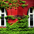 Ivy Growing on Red Brick Wall — Stock Photo