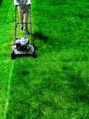 芝生の草を刈る — ストック写真