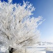Frost on Tree - Stock Photo