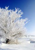 Frost on Tree — Stock Photo