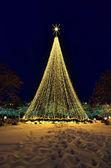 Christmas Lights and Tree — Stock Photo
