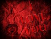 Valentines Rose — Stock Photo