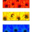 Primary Colors Abstract Art Flowers — Stock Photo