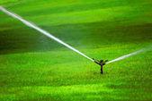 Sprinkler on Grass — Stock Photo