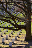 Arlington Cemetery with Tree — Stock Photo