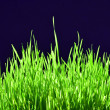Freshly Grown Grass — Stock Photo