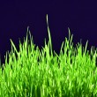 Freshly Grown Grass — Foto de Stock
