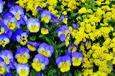 在院子里的花的花园 — 图库照片