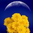 Bouquet of Yellow Flowers — Stock Photo