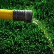 Stock Photo: Hose on Green Grass