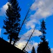 Pine Tree Silhouette Yellowstone National Park — Stock Photo