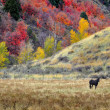 Horses Grazing in Fall — Stock Photo