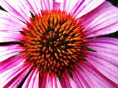 Closeup of Pink Flower Stamen — Stock Photo