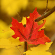 Autumn Leaves with One Red Leaf — Stock Photo