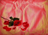 Long Stemmed Rose on Texture — Stock Photo