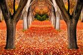 Pád stromů krajina — Stock fotografie