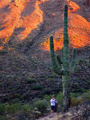 Desert Southwest Saguaro Cacti with Girl — Stock Photo
