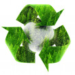 Recycle Symbol with Forest of Pine Trees — Stock Photo