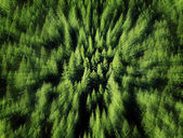 Forest of Pine Trees Zoomed Blur — Stock Photo