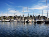 Sailboats Docked in Marina — Stock Photo