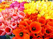 Bunches of Fresh Tulips — Stock Photo