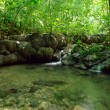 Stock Photo: Waterfall in jungle