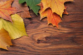 Leaves on the board — Stock Photo