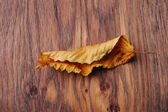 Dried leaf on the table — Stock Photo