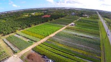 Luftbild von landwirtschaftlichen nutzflächen — Stockvideo