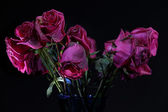Dying roses — Stock Photo