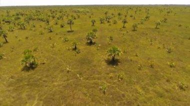 Nature preserve in Florida — Stock Video