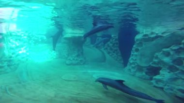Dolphins swimming video — Stock Video