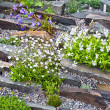 Alpine Rock Garden — Stock Photo #12660811