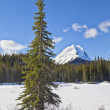 Stock Photo: Jasper National Park