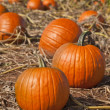 Pumpkin Patch — Stock Photo #13657708