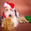 Stock Photo: Christmas Terrier