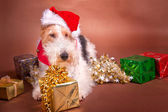 Christmas Terrier — Stock fotografie