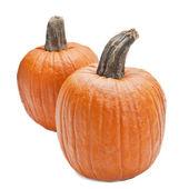 Farm Grown Pumpkins — Stock Photo