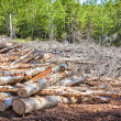 Clear Cutting - Stock Photo