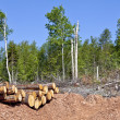 Stock Photo: Clear Cutting
