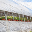 Stock Photo: Commercial Greenhouse