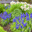 Stock Photo: Spring Garden Flowers