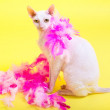 Cornish Rex — Stock Photo