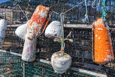 Lobster Traps and Buoys — Stock Photo