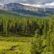 Alberta Wilderness — Stock Photo