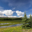 Alberta Wilderness — Stock Photo #30510689