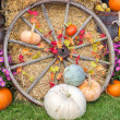 Fall Display — Stock Photo #30605089