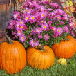 Fall Display — Stock Photo