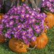 Stock Photo: Fall Display